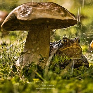 Большой гриб