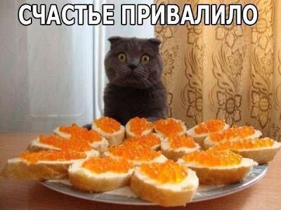 Кот и красная икра