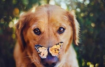 Собака и бабочка. Идилллия.