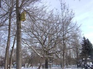 Скворечник в парке