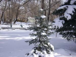 Ёлочка в снегу