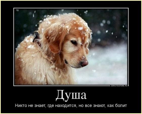 душевная собака