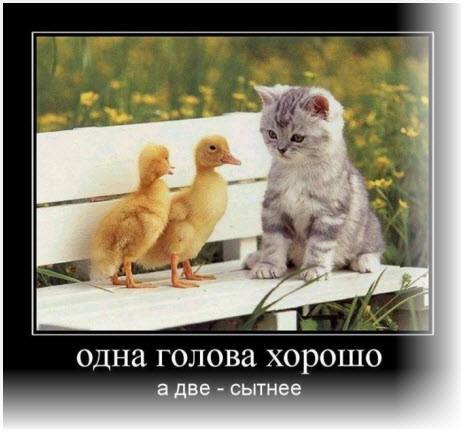 Цыплята и кот
