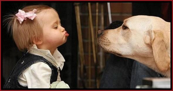 Любовь к собаке Love to the dog