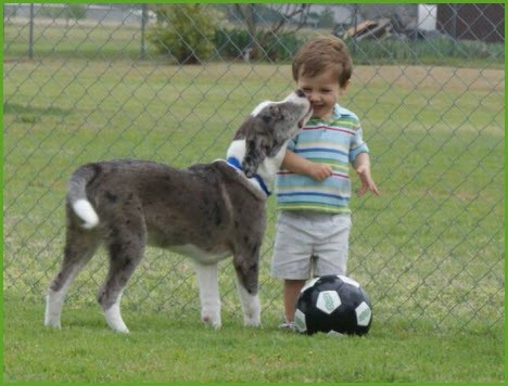 Футбол с собакой Soccer with a dog