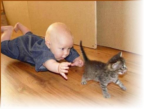 Хвостик кота The tail of the cat