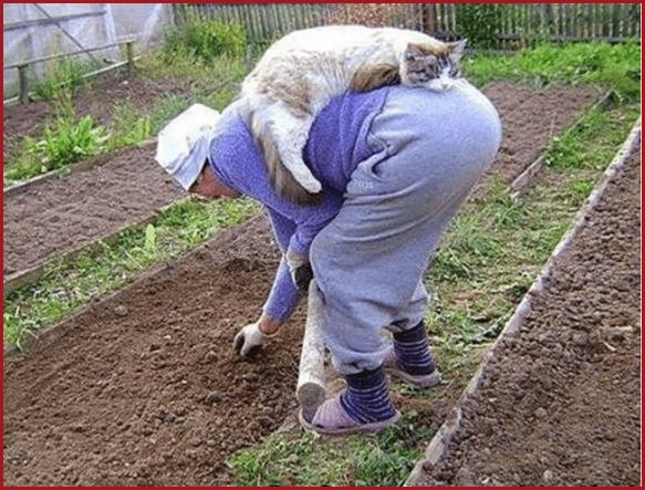 Бабушка и кошка