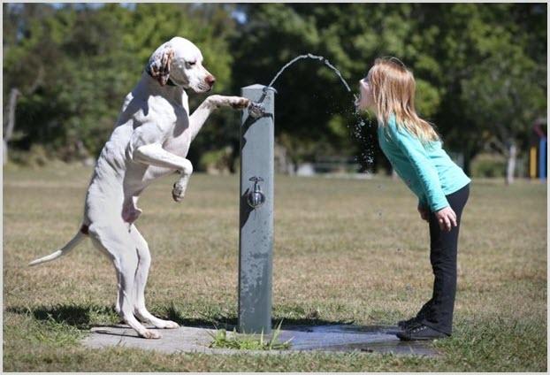 Пёс и девочка