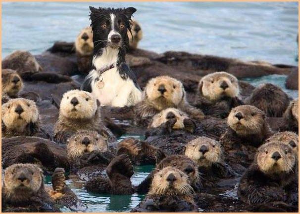 Пёс и бобры