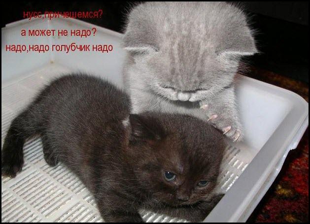 Котята причёсываются