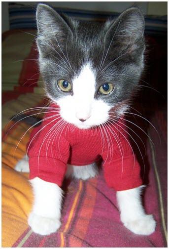 Шикарный прикид котёнка