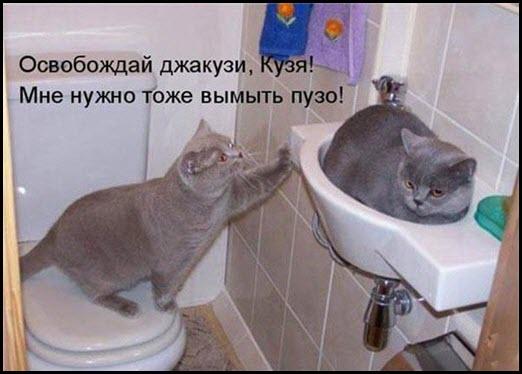 Кот и кошка в джакузи