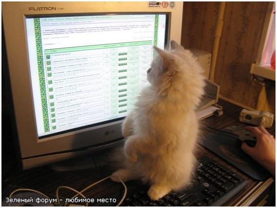 Котёнок любит форумы посещать