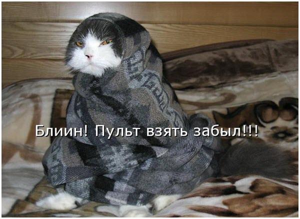 Кот с комфортом смотрит телевизор