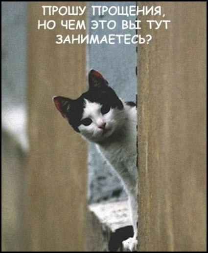 Любопытная кошка Люся