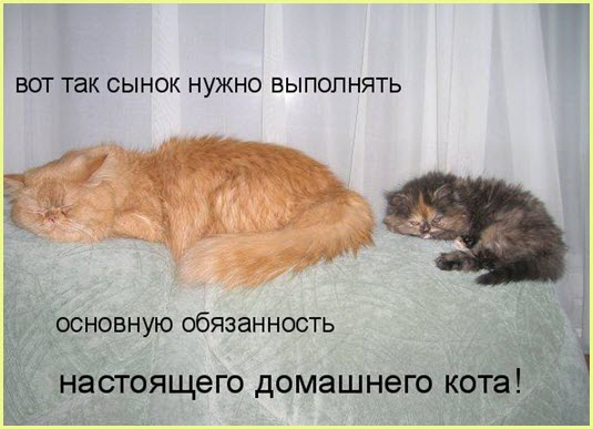 Мама кошка учит котёнка