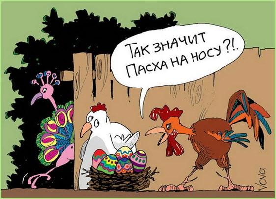 Курица одурачила петуха