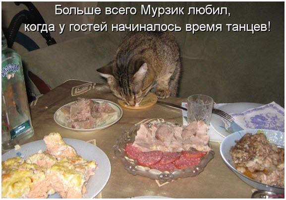 Котик ест