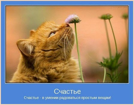 Счастливый кот