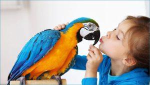 Любуется девочка попугаем