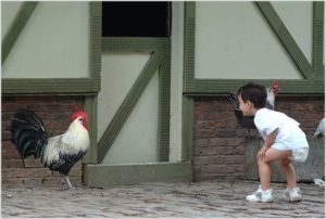 Мальчик любуется петухом