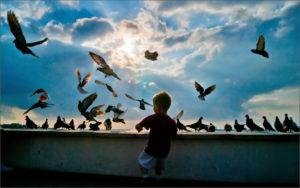 На фото мальчик и голуби