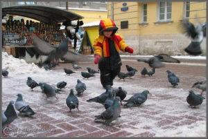 Голуби гуляют и мальчик с ними