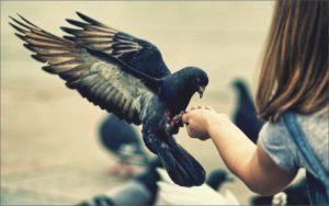 Голубь на руке у девочки