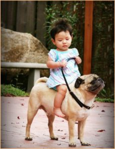 Девочка верхом на собаке