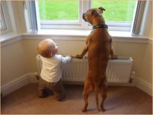 Малыш и пёс у окна