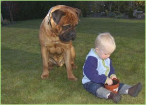 Большой пёс и мальчуган
