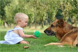 Маленькая девочка играет с овчаркой
