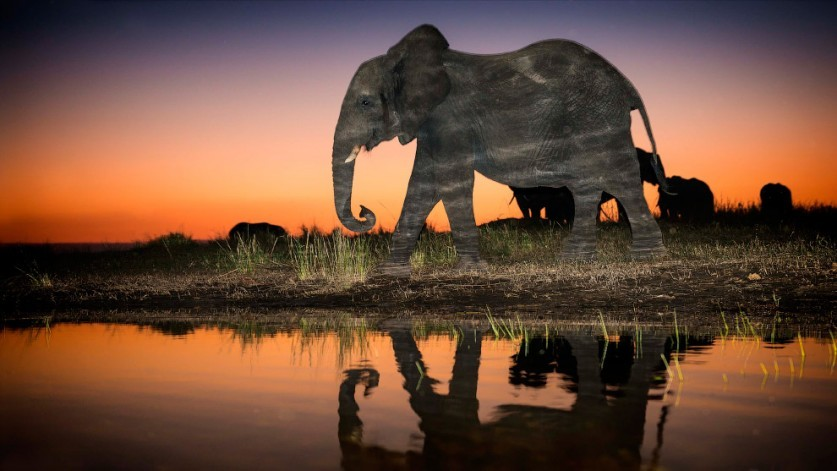 Картинка слон