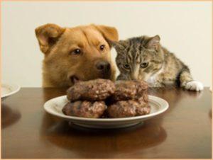 Кошка и собака облизываются на котлеты