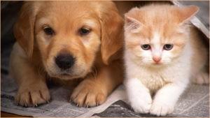 Рыженькие котёнок и щенок