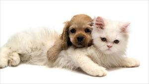 Белая кошка с щенком