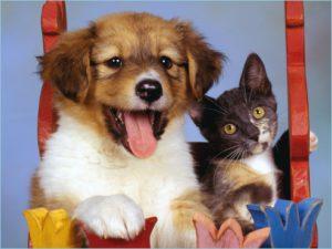 Красивые кошка и собака