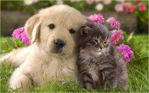Шенок и котёнок хорошенькие