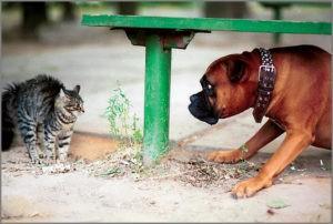 Кошка Мурка и собака Буран