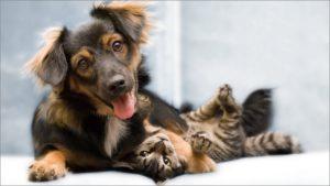 Собака играет с кошкой