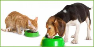 Собака и кошка едят из своих мисок