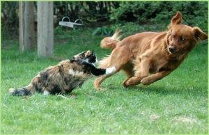 Кошка напугала собаку