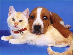 Друзья :собака и кошка