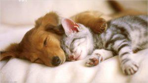 Собака и кошка спят в обнимку
