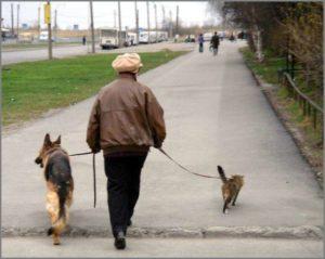 На прогулке с собакой и кошкой
