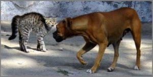 Собака издалека смотрит на кошку