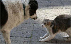 Удивлённая собака и испуганная кошка
