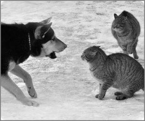 Собака овчарка и два кота