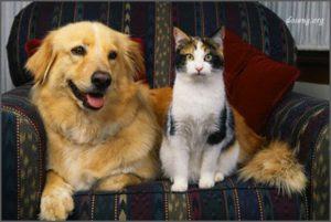 Пёс Дружок и кошка Муся
