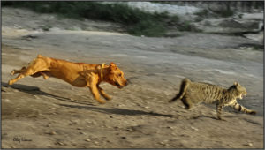 Погналась собака за кошкой